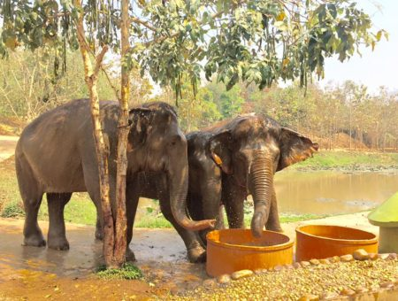 rescued elephants