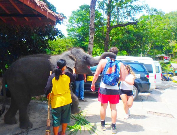Thailand: A closer look at animals in tourism.