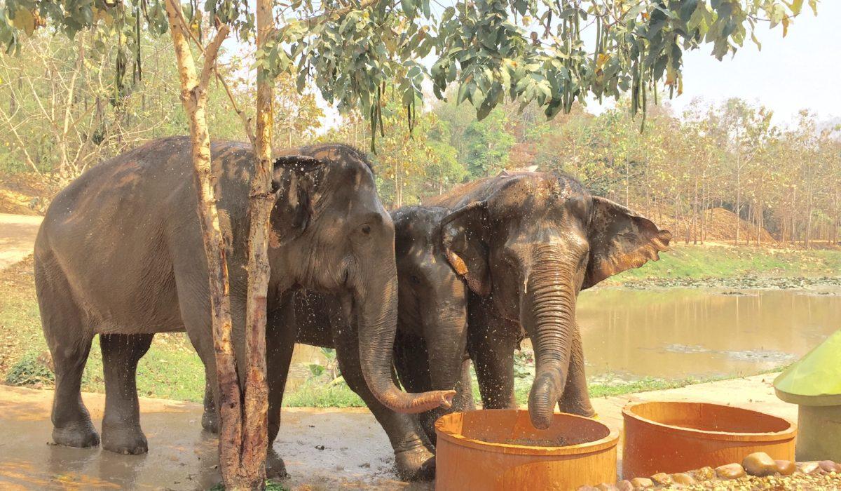 Boon Lott's Elephant Sanctuary